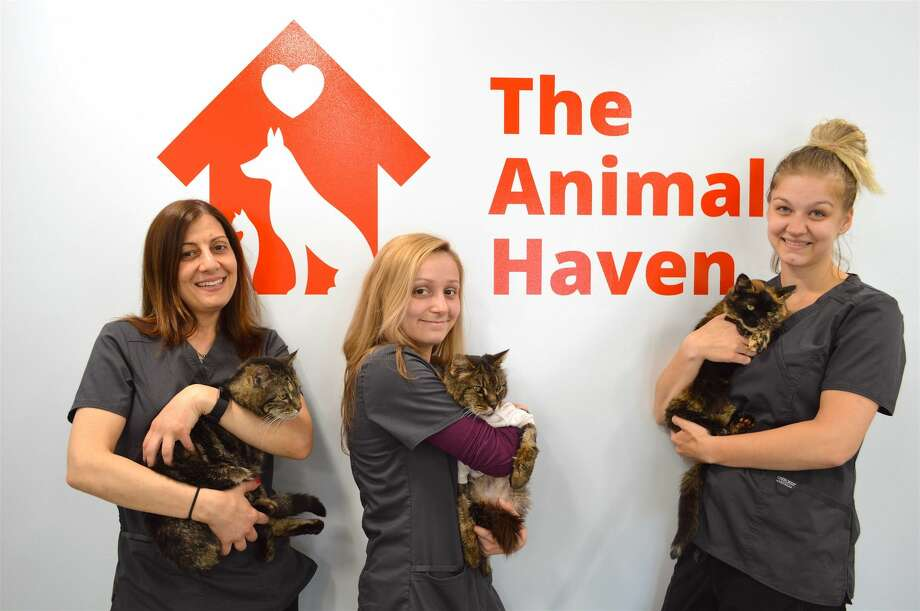 Members of The Animal Haven's dedicated staff and some residents, including, from left, Michelle DeRose, manager, with Missy, Kaitlyn Wahl, kennel assistant, with Henry, and Alysa MacDonald, kennel assistant, with Valentina.