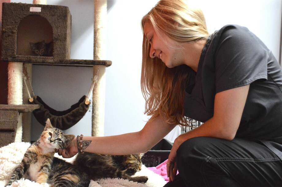 Kaitlyn Wahl, a kennel assistant at the Animal Haven, with a cat buddy.
