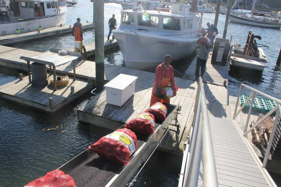 Workers at Briarpatch Enterprises unload clams harvested on Oct. 24 from beds in Milford.