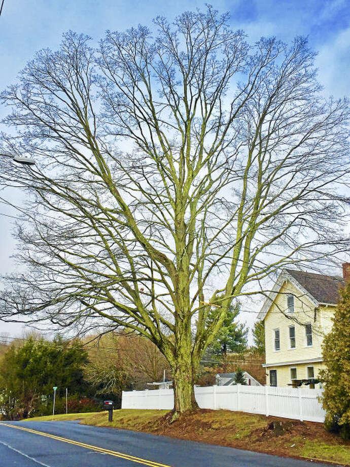 pc-notable tree