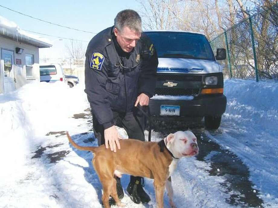 Photo by Lynn Fredricksen Hamden Animal Control Officer Chris Smith visits with Homer, one of several mixed breed pit bulls available for adoption through the North Haven Animal Shelter. Like the others, Homer was picked up as a stray in Hamden. Because Hamden has no animal shelter animal control officers there work closely with North Haven's Animal Control Officer and share North Haven's facility on Universal Drive. To meet Homer or another available dog, call North Haven Animal Control Officer David Carney at 203-239-5321, ext. 415.
