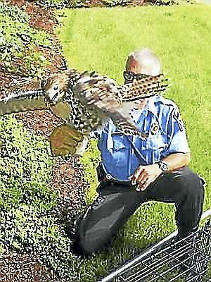 Hamden Animal Control. Animal control responds to an injured red-tailed hawk.