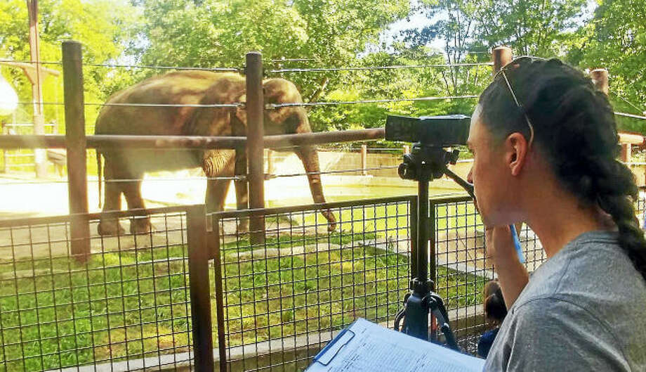 Contributed photo. Hamden Hall science teacher Leah Mucciarone toook part in an elephant behavior study at the Smithsonian National Zoo this summer.