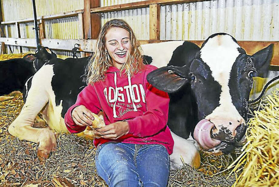 Photo by Catherine Avalone / Hearst Connecticut Media Meriden resident Victoria Footit, 17, feeds a doughnut to Turquoise, her 19-month old Holstein at the 75th annual North Haven Fair, Saturday at the North Haven Fairgrounds at 290 Washington Ave. in North Haven. Footit said her family raises 40 heads of dairy and beef cows.