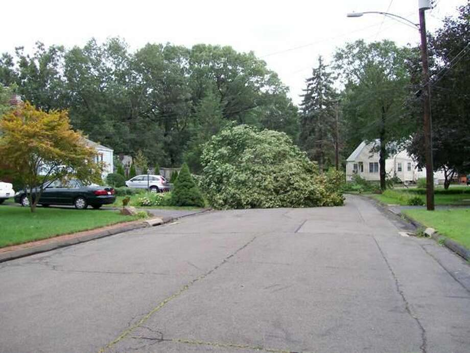 Photo by Lynn Fredricksen This fallen tree rendered Matthew Lane nearly impassable on Sunday afternoon.