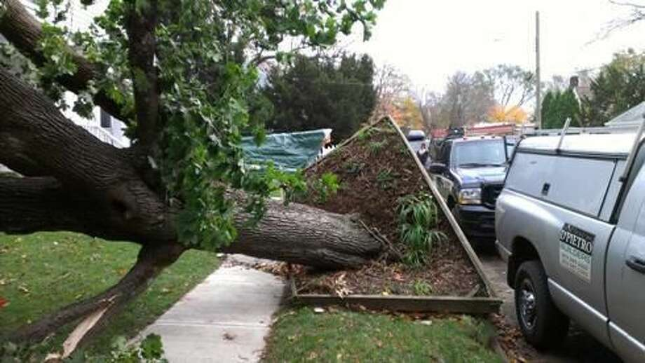 A downed tree at 163 Harmon Street in Hamden