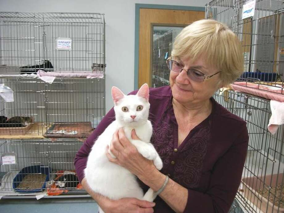 Five-month-old Henrietta enjoys being cuddled by Charlotte Timberman, President of the Animal Haven Association, at the adoption facility on Mill Road. Henrietta is one of many healthy young cats available for adoption.