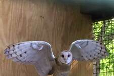 Millie the barn owl is eager to answer this question and greet visitors of all ages at the annual, nature-themed Halloween event October 25 at The Connecticut Audubon Society's Center at Fairfield.