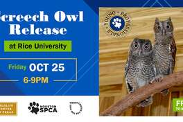 Three rehabilitated owls will be released back into the wild during an event hosted by Rice University in dedication to their long-time mascot.