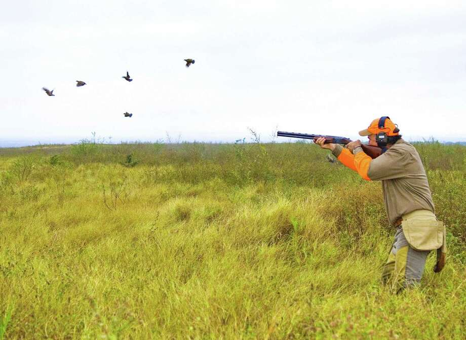 White-tail deer begins Saturday. But for those looking to hunt quail, that animal's season is already in full swing and will last until Feb. 23, 2020. Photo: Shannon Tompkins / Houston Chronicle