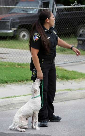 Sight of abused dogs in San Antonio prompted meter reader to work on behalf of pets