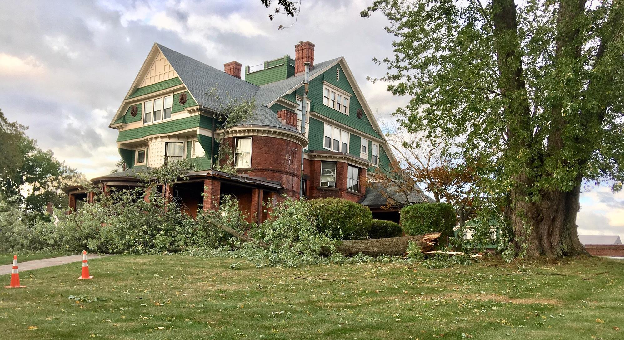 Wind blows tree onto UB administrative building