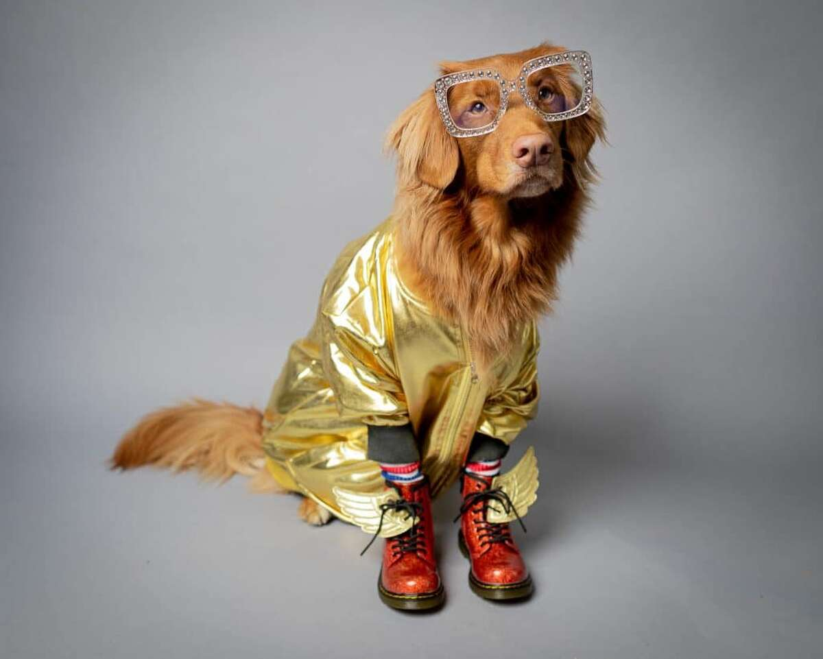 Need dog costume inspiration? Check out these four styles from some of Rover's office dogs, followed by more inspiring costumed pooches... Rocketman was one of the year's most buzzed-about movies. Willie the Nova Scotia Duck Tolling Retriever pulls off this sparkly Elton John ensemble.