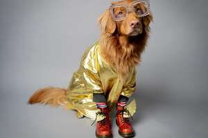 Need dog costume inspiration? Check out these four styles from some of  Rover 's office dogs, followed by more inspiring costumed pooches...    Rocketman was one of the year's most buzzed-about movies. Willie the Nova Scotia Duck Tolling Retriever pulls off this sparkly Elton John ensemble.