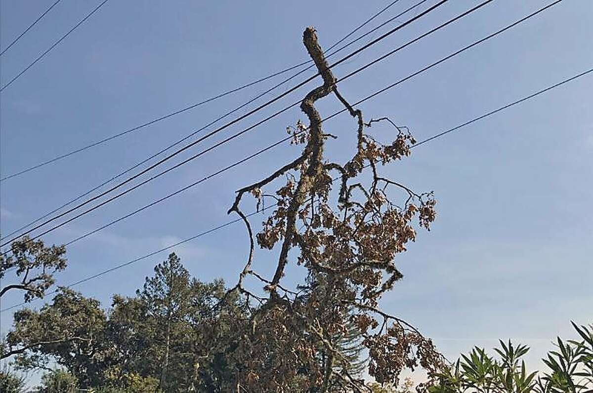 A branch was found on a PG&E power line in Napa County during the system wide PG&E shutoff in mid - October 2019.