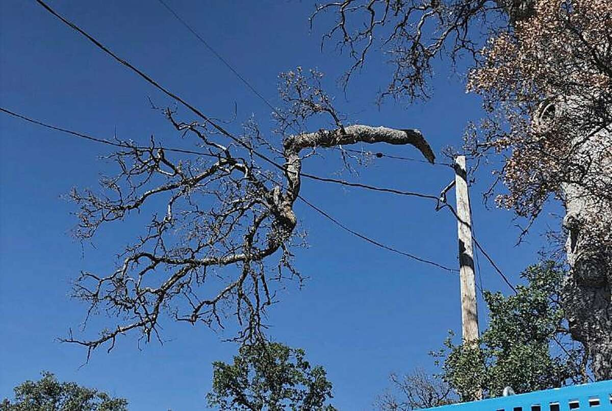 A branch was found on a PG&E power line in Glenn County during the system wide PG&E shutoff in mid - October 2019.