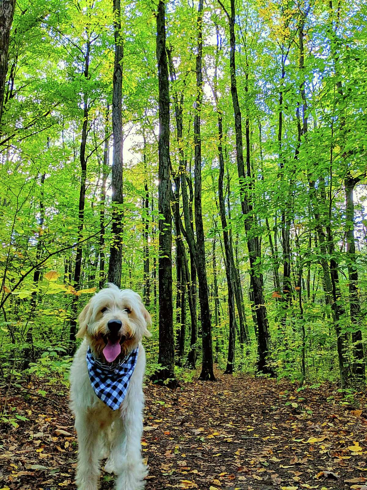 In September the Boswell family took a hike on the trails at Clifton Park's Kinns Road Park, a trip that included their one-year-old golden doodle Murphy and their daughter Chloe. (Robert Boswell Jr.)