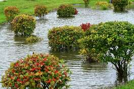 Bushes in a landscaped area in front of Cohoes High School are partly submerged from rain water on Thursday, Oct. 17, 2019 in Cohoes, N.Y. (Lori Van Buren/Times Union)