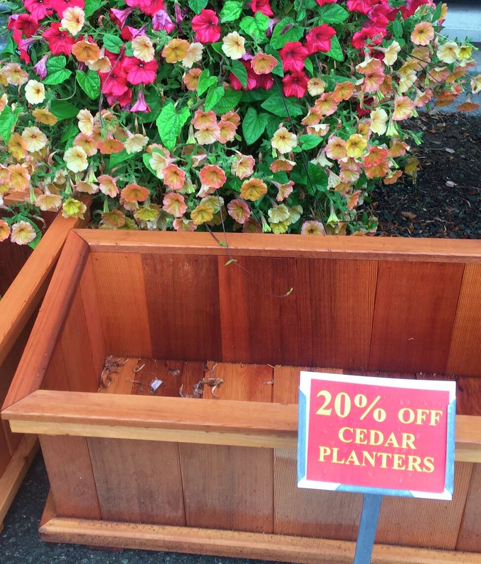 These cedar planters, photographed Aug. 21, 2019, at Bayview Farm & Garden near Langley, Wash., were included among the many items marked down during its annual late season progressive sale. Fall is the best time of the year to get new trees, shrubs and perennials into the ground before cold weather sets in. It's often the best time to buy them, too. (Dean Fosdick via AP)