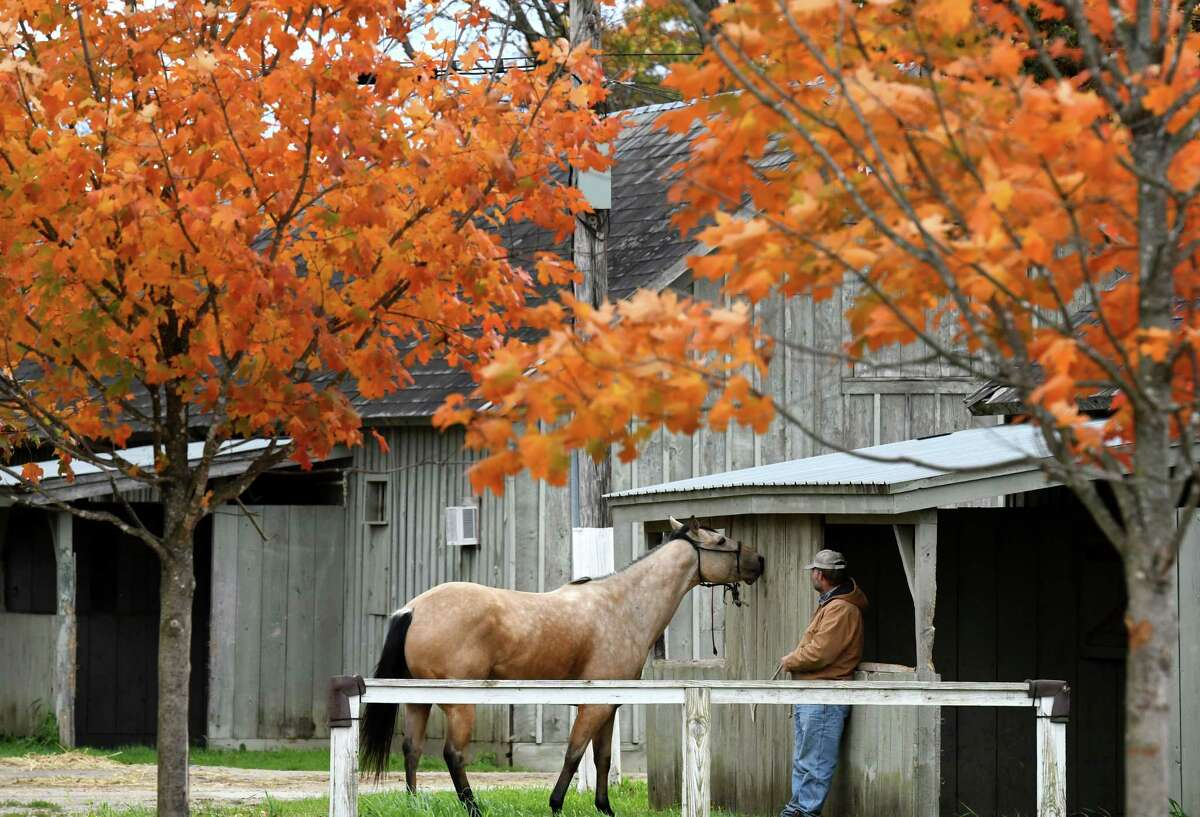 Bronc Vogele takes his outrider horse, Duke, out for some grazing under the fall foliage following morning workouts at the Oklahoma Training Track on Friday, Oct. 18, 2019, in Saratoga Springs, N.Y. (Will Waldron/Times Union)