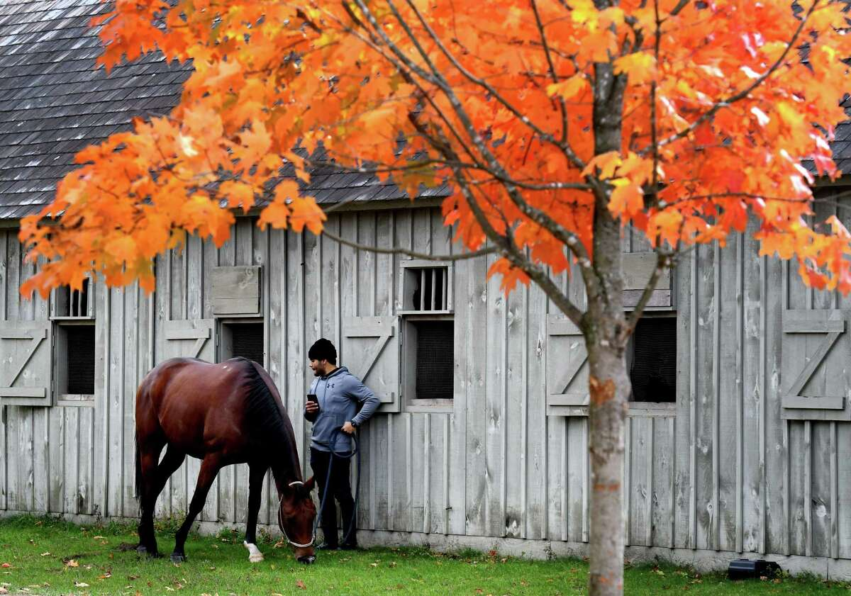 A horse is taken out to graze under the fall foliage at Oklahoma Training Track on Friday, Oct. 18, 2019, in Saratoga Springs, N.Y. (Will Waldron/Times Union)
