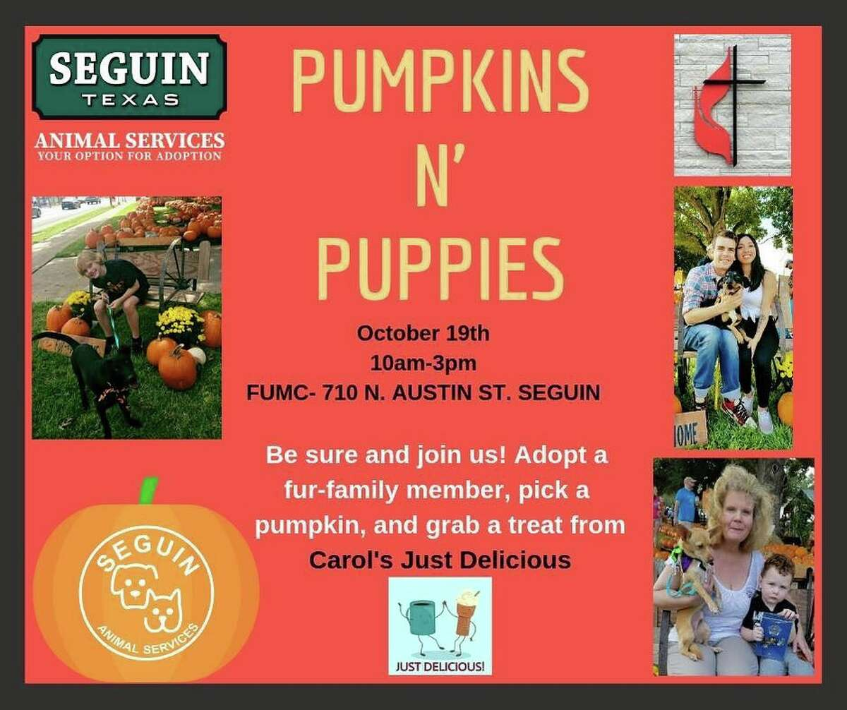 Pumpkins and Puppies adoption takes place this Saturday.