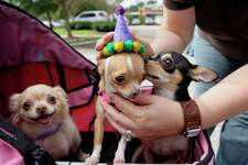 Barktoberfest, a play on the German Oktoberfest, is an afternoon pet festival featuring costume contests, dachshund races and family-friendly games. The fest will have a beer garden, food trucks and pet-oriented vendors. Noon-4 p.m. Sunday, Animal Defense League, 11300 Nacogdoches Road, perrin410animalhospital.com Polly Anna Rocha