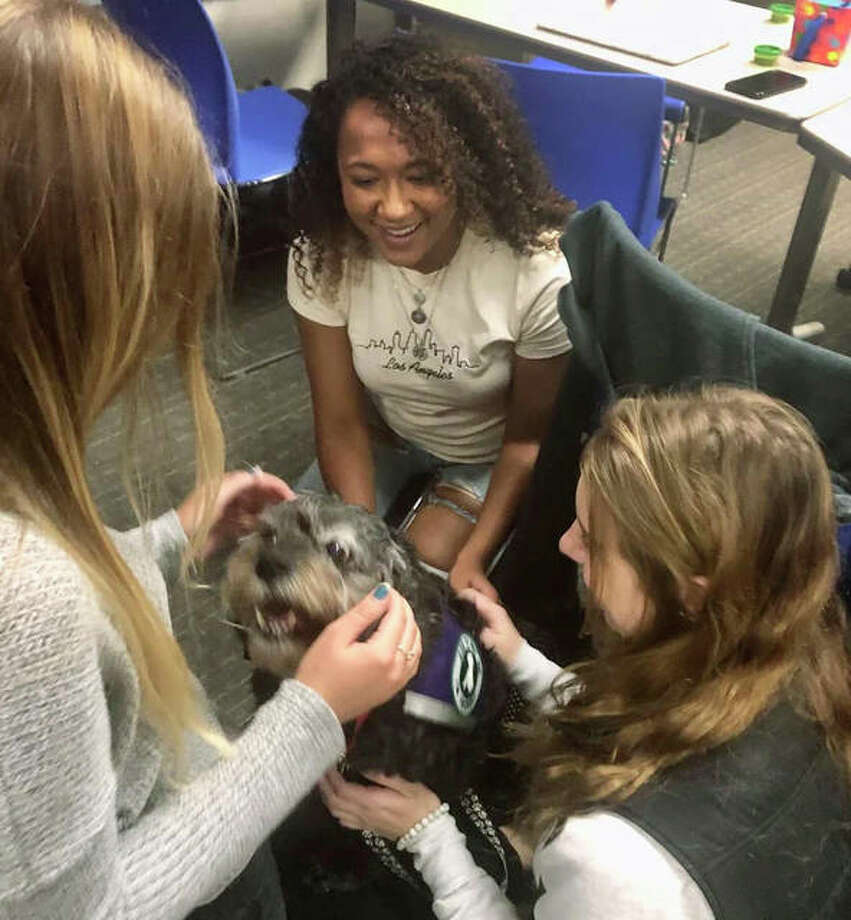 SIUE education students Madison Hamby, Marina Taylor, and Ashley Orr learn first-hand the opportunities presented by having therapy dogs in a classroom setting. Photo: SIUE|For The Telegraph