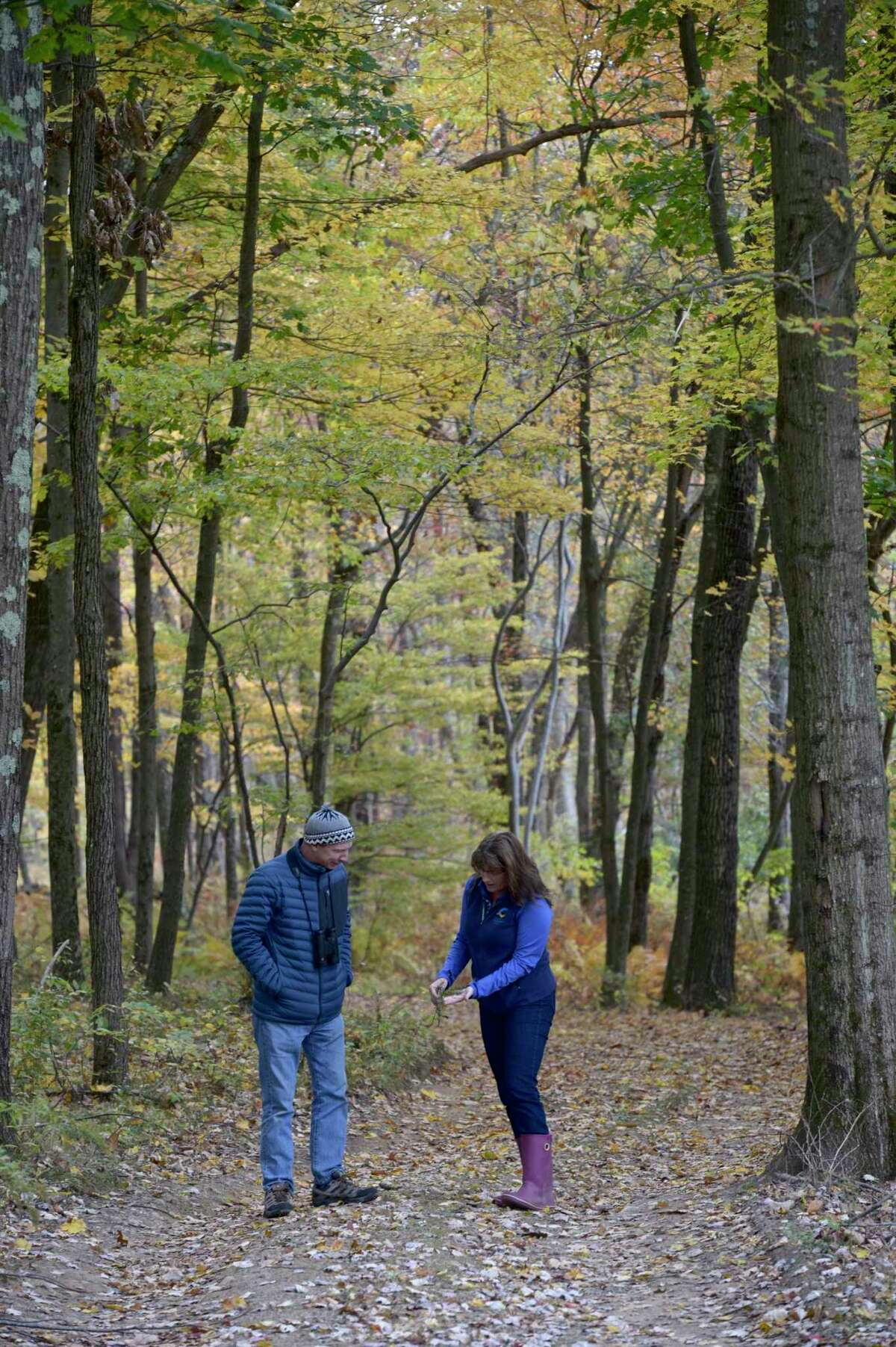 Director Cathy Hagadorn, right, and biologist Jim Arrigoni on one of the trails at Deer Pond Farm in Sherman. Like many places in the state, dear Pond has lost a number of trees to the invasive emerald ash borer. They are using the tree losses to create new spaces that will attract birds. Wednesday, October 16, 2019, in Sherman, Conn.