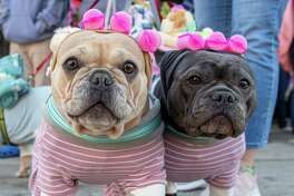 "Osiris and Gabby, dressed in pajamas with rollers in their ""hair,"" pose for a photo during the Hounds of Halloween3, a benefit hosted by the Albany Business Improvement District where dogs and their owners trick-or-treat through downtown Albany to benefit the Mohawk Hudson Humane Society on Saturday, Oct. 19, 2019 (Jim Franco/Special to the Times Union.)"