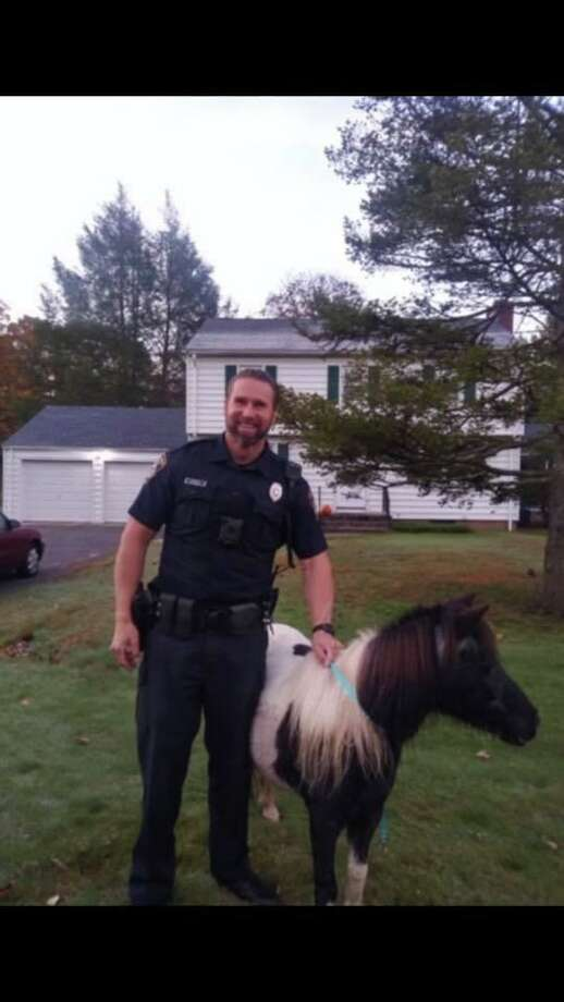 North Haven Police Officer Petrillo poses with Annie, a horse who got loose on Oct. 20, 2019, before returning her to her ranch. Photo: Contributed Photo / North Haven Police Department