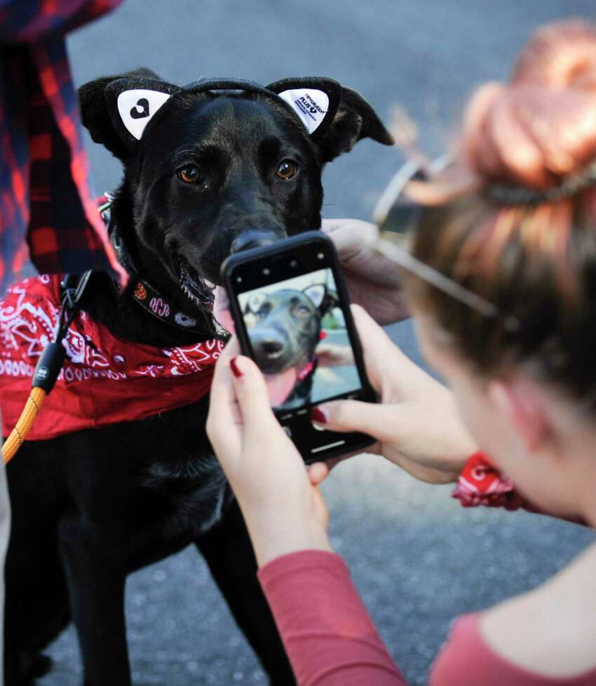 Shadow, an 8-month-old mixed breed rescue dog, impersonates a feline friend as his owner Bella Wilson of Cos Cob snaps a photo to post on instagram. The pair attended the Spot On Veterinary Hospital & Hotel Barktoberfest party on Oct. 19, 2019 in Stamford, Connecticut. The family and pet friendly event included a Pet Costume Contests, Paw print painting, Bounce House, Kids Story Time, Ask the Vet, tours, and Festive Food & Treats.