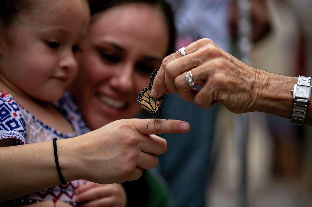 Monika Maeckle places a tagged monarch butterfly on the finger of Victoria Martinez as she watches with her daughter Yazmin Martinez, 4, during 4th annual Monarch Butterfly and Pollinator Festival at the Pearl in San Antonio, Texas, Oct. 20, 2019.
