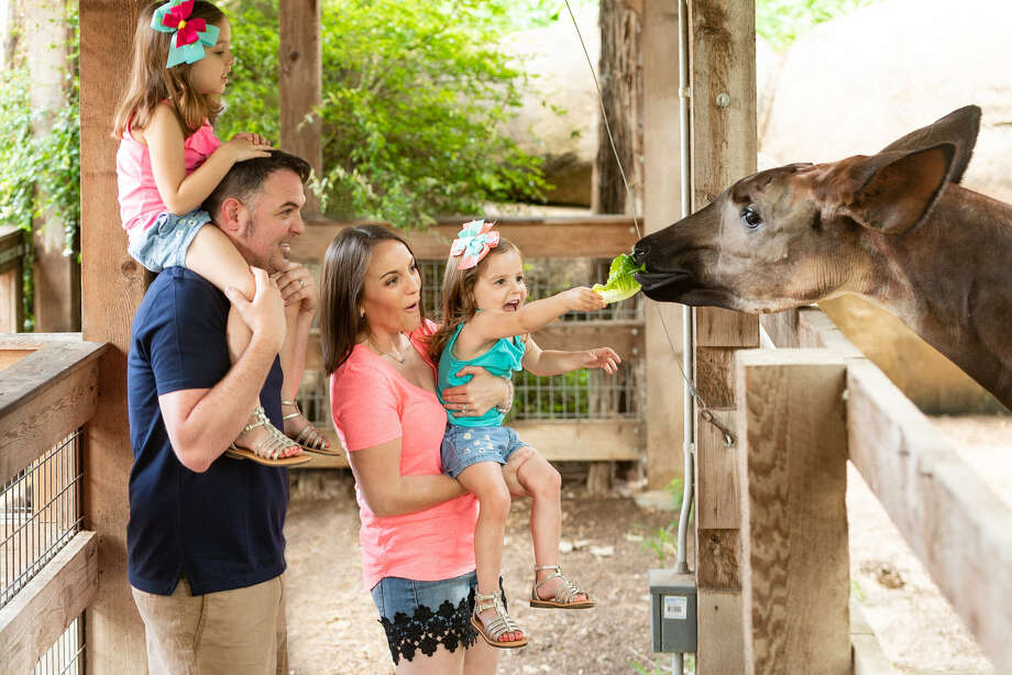 Locals can get into the San Antonio Zoo for only $8 this Monday. Photo: San Antonio Zoo