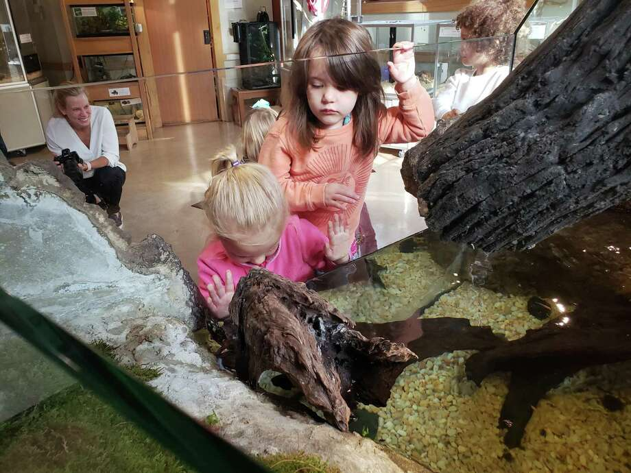 Two girls from the Darien Nature Center's preschool program are looking at turtles swimming in the new exhibit. Photo: Sandra Diamond Fox / Connecticut Post