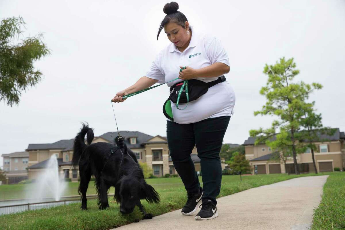 Valet Living Home associate Angela Dubose walks Bohdi the dog for a resident at Falls at Copper Lake Apartments on Wednesday, Oct. 16, 2019, in Houston. Valet Living, the company best known for doorside trash pickup, also provides on-call pet visits, dry cleaning, house keeping and fitness to apartment complexes now.