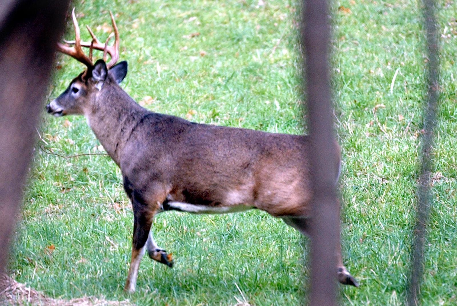 Monrore official issues deer tips