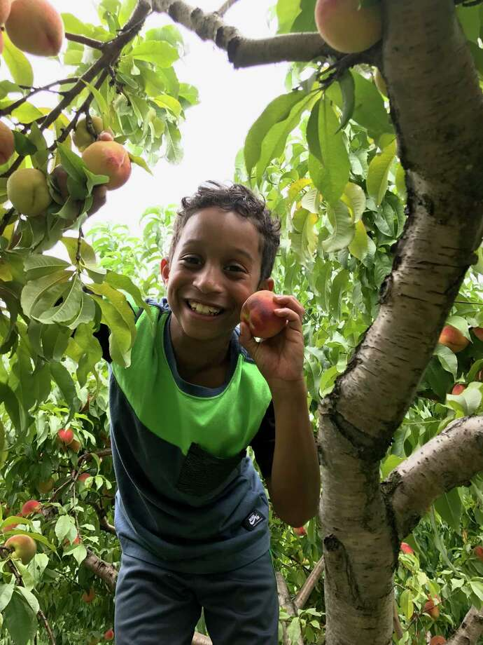 Tristen Alston, of Manhattan, holds a peach he picked while visiting the Rice family of Ridgefield. Tristen visited the Rices this past summer as part of The Fresh Air Fund's Friendly Towns Program. Photo: Angela Rice / Contributed Photo