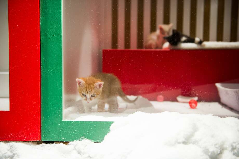 Visitors watch the adoptable puppies and kittens at the Macy's windows in San Francisco in 2018. Photo: Beth LaBerge / Orange Photograph