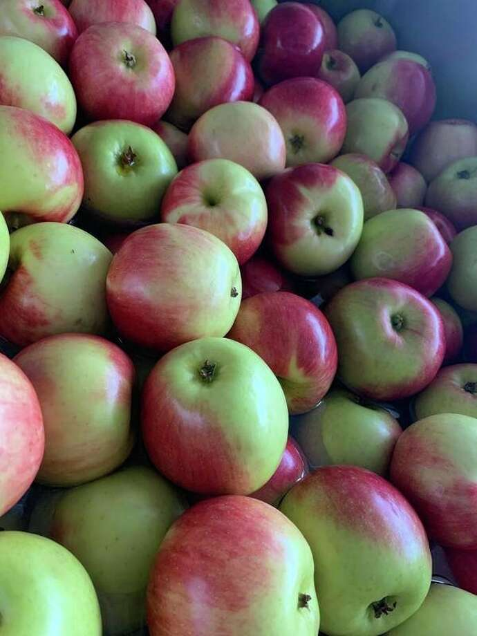 Benzie Central students have enjoyed eating locally grown apples. (Submitted photo)