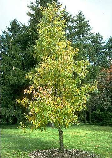 Now Is The Time To Plant Shade Trees In Your San Antonio