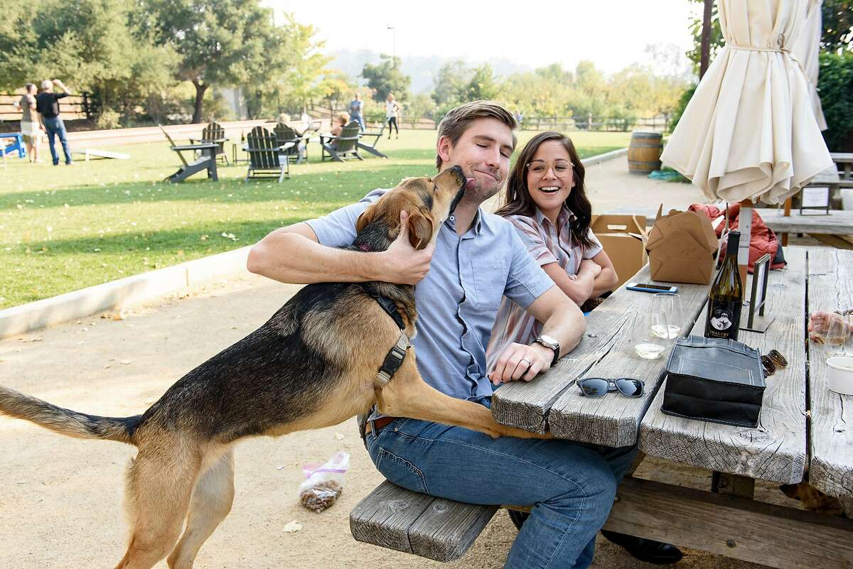 Conor McLaughlin gets a kiss from his dog Ava as he and Paige McLaughlin sip wine with friends in a picnic area at Imagery Estate Winery in Glen Ellen, Calif, on Sunday November 11, 2018.