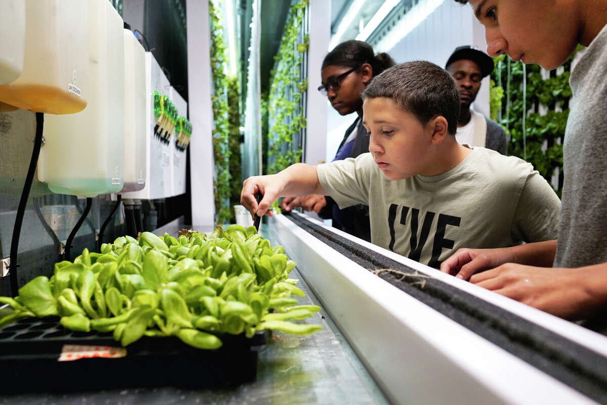 Kelyse Bell, 13, left, Nathanial Clark, 11, center, and Deivis Benitez, 13, work with lettuce seedlings inside the freight farm at the Boys & Girls Clubs of the Capital Region on Monday, October 7, 2019, in Troy, N.Y. (Paul Buckowski/Times Union)