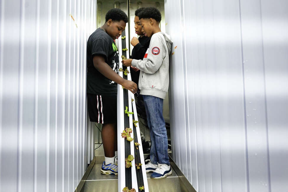 Ahzeen Macon, 13, left, Zyon Randall, 13, center, and Eldakai Keens, 11, look over lettuce in a column that they are growing inside the freight farm at the Boys & Girls Clubs of the Capital Region on Monday, October 7, 2019, in Troy, N.Y. (Paul Buckowski/Times Union)