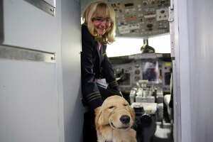 Alaska Air first officer Laura Mason pets Chris Yoon's guide dog Sadie during a training event hosted by Guide Dogs for the Blind and Alaska Airlines where guide dogs, puppies-in-training and people with disabilities, including visually impaired, hearing impaired and those reliant on wheelchairs, were able to explore mock airplanes and learn various safety measures in a controlled environment, Monday, Oct. 21, 2019 at the Alaska Airlines Flight Operations Building.