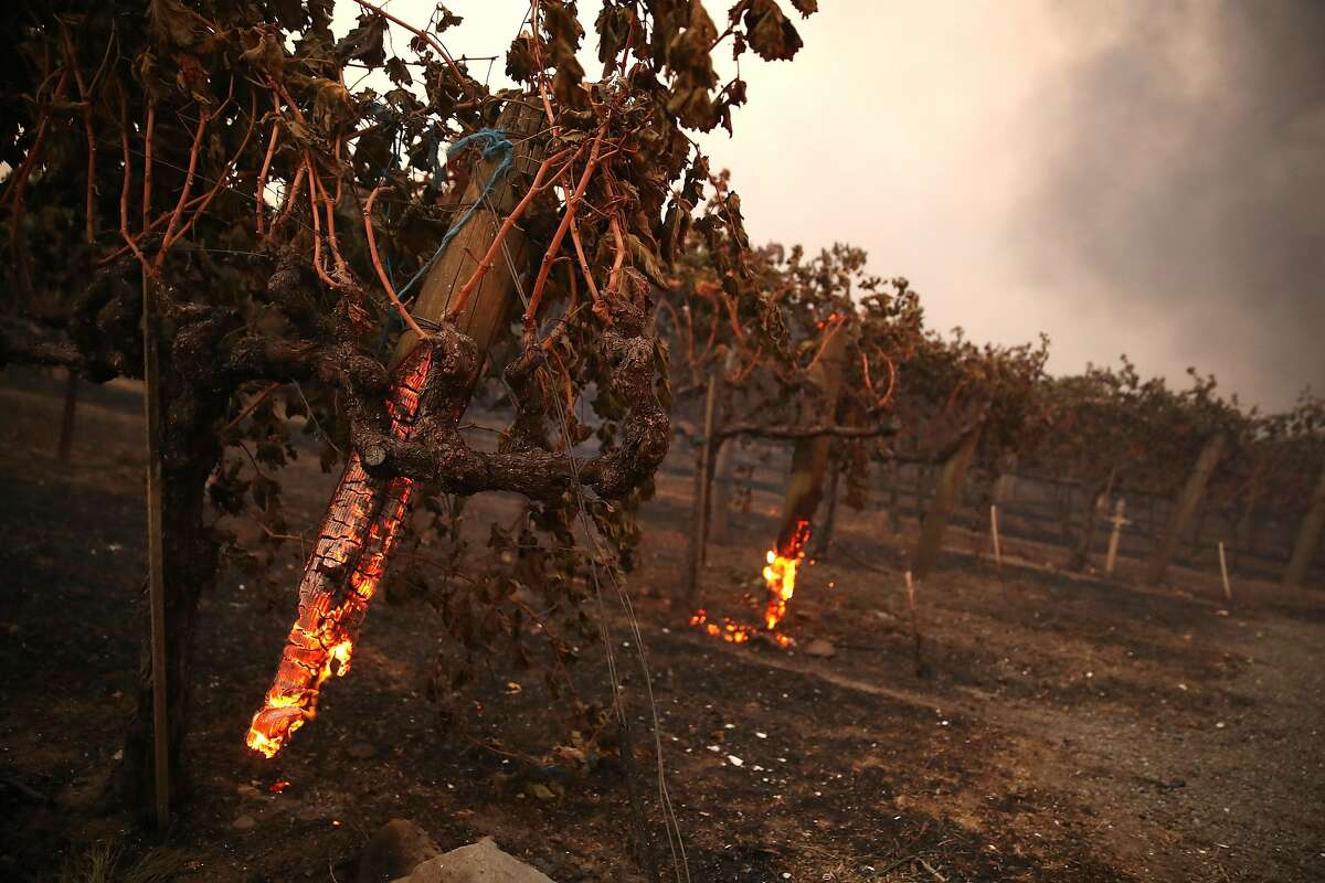 GEYSERVILLE, CALIFORNIA - OCTOBER 24: Stakes holding up grape vines smolder after the Kincade Fire moved through the area on October 24, 2019 in Geyserville, California. Fueled by high winds, the Kincade Fire has burned over 10,000 acres in a matter of hours and has prompted evacuations in the Geyserville area.