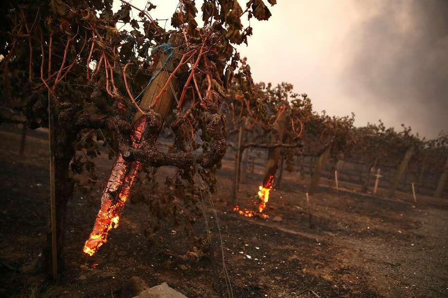 Stakes holding up grape vines smolder in the wake of the Kincade Fire's stampede through the area near Geyserville in Sonoma County. Photo: Justin Sullivan / Getty Images