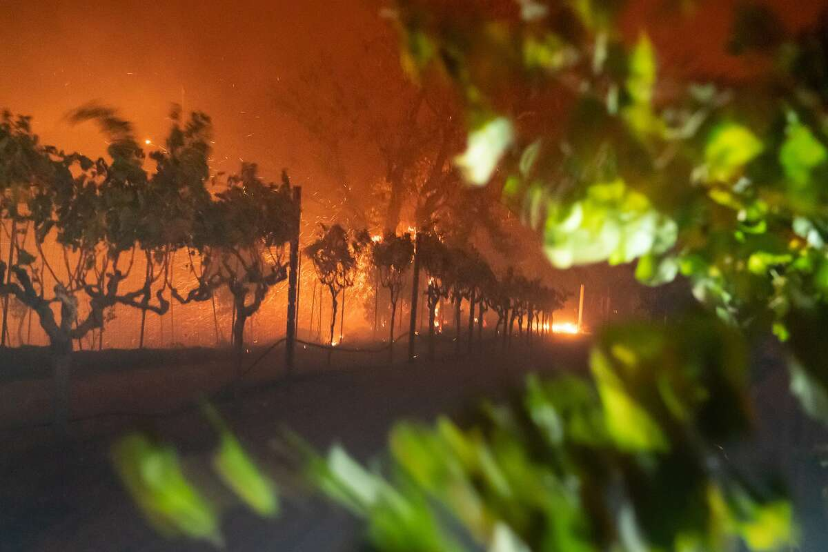 High winds blows a vineyard on Thursday, Oct. 24, 2019, in Geyserville, Calif.