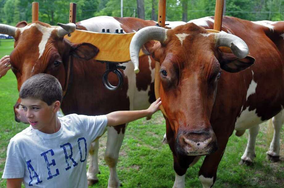 Ben Harris, 12, of Slingerlands meets Ken and Peter, twin red holsteins from Cambridge, Washington County, who have never been apart, during the 18th Century Day at the Historic Schuyler House in Schuylerville on Sunday, Aug. 8, 2010.  ( Philip Kamrass / Times Union ) Photo: PHILIP KAMRASS