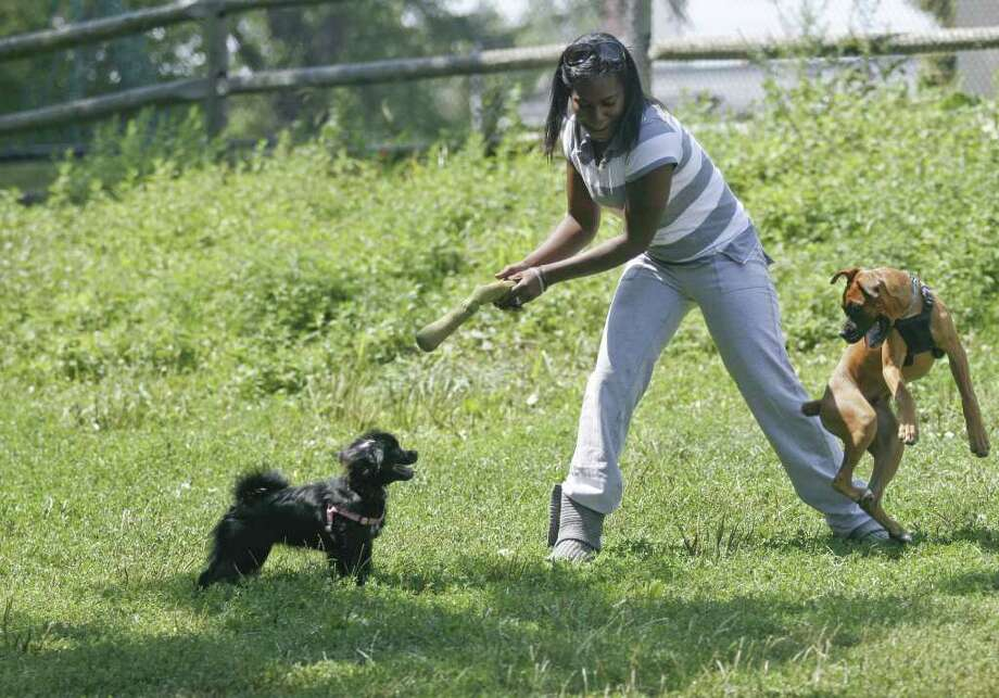 Cindy Jordon throws a toy for Lola, left, and Puma, right, at the Stamford Dog Park on Sunday, August 8, 2010. Photo: Laura Buckman / Connecticut Post